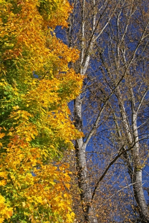 Autumn trees in region Liptov, Slovakia Stock Photo - 17624693