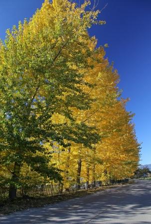 Autumn trees in region Liptov, Slovakia Stock Photo - 17617027