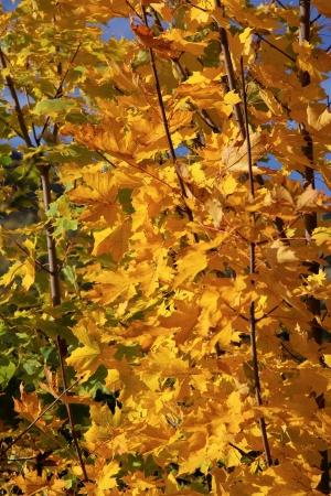 Autumn trees in region Liptov, Slovakia  photo