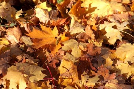 Autumn trees in region Liptov, Slovakia Stock Photo - 17719055