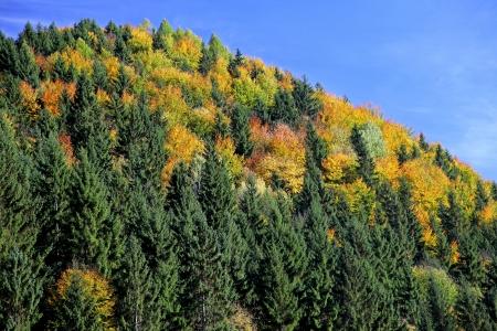 Autumn forest in region Liptov, Slovakia  Stock Photo - 17719073