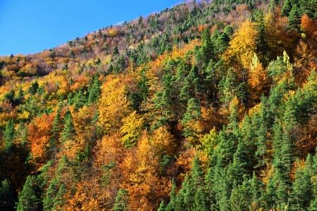 Autumn forest in region Liptov, Slovakia Stock Photo - 17719070