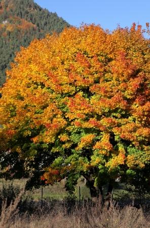 Autumn trees in region Liptov, Slovakia Stock Photo - 17719050