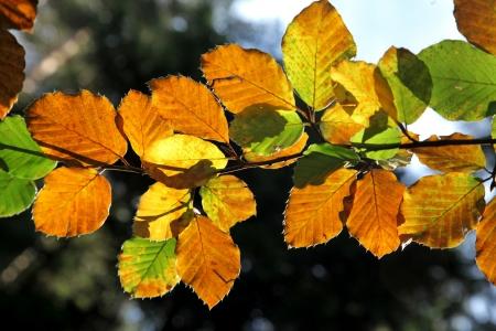 Autumn leaves Stock Photo - 17860736