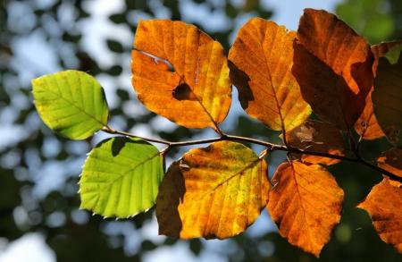 Autumn leaves Stock Photo - 17860717