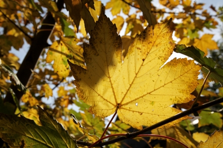 Autumn leaves Stock Photo - 17902155