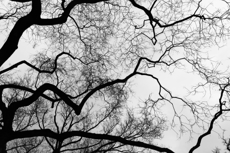 limb: Black   white limb - neurons