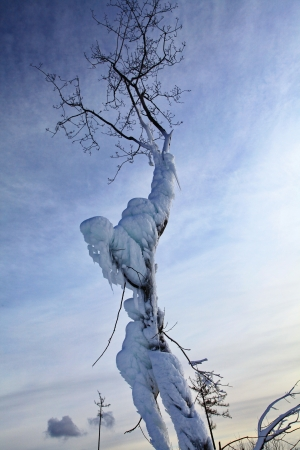 Frozen tree in Tatranska Lomnica - High Tatras mountains, Slovakia  Stock Photo - 18002833