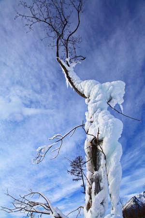 Frozen tree in Tatranska Lomnica - High Tatras mountains, Slovakia  Stock Photo - 18002935