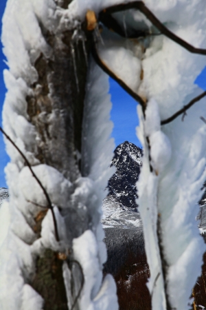 Frozen tree in Tatranska Lomnica - High Tatras mountains, Slovakia  Stock Photo - 18002781