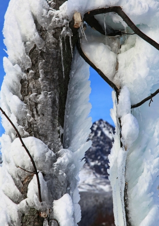 Frozen tree in Tatranska Lomnica - High Tatras mountains, Slovakia  Stock Photo - 18002818