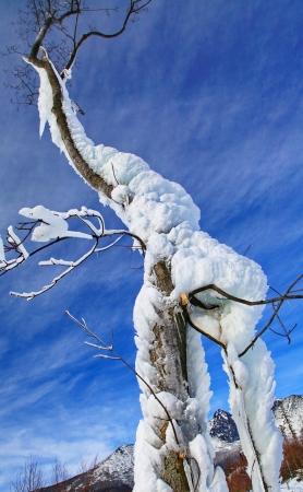 Frozen tree in Tatranska Lomnica - High Tatras mountains, Slovakia Stock Photo - 18002743