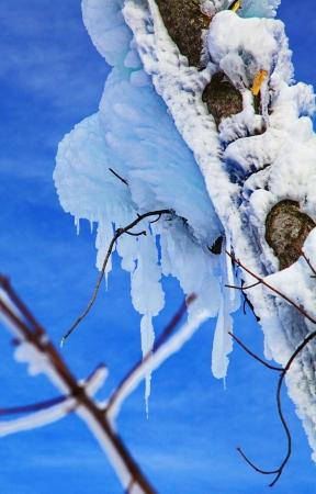 Frozen tree in Tatranska Lomnica - High Tatras mountains, Slovakia Stock Photo - 18002783