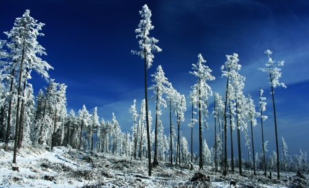 Winter trees  Tatranska Lomnica - High Tatras, Slovakia   Stock Photo - 18002676