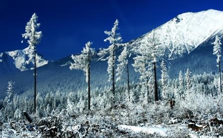 Winter trees  Tatranska Lomnica - High Tatras, Slovakia Stock Photo - 18002748