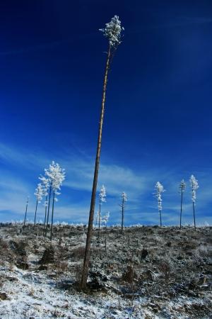 Winter trees  Tatranska Lomnica - High Tatras, Slovakia   Stock Photo - 18002412