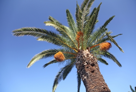 rethymno: Palm tree at town Rethymno, Crete Stock Photo