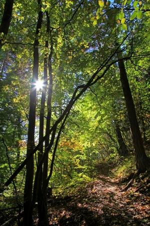 ruzomberok: Bosque cerca de la ciudad de Ruzomberok, Eslovaquia Foto de archivo