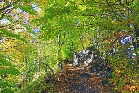 Forest near town Ruzomberok, Slovakia photo