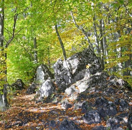 ruzomberok: Bosque cerca de la ciudad Ruzomberok, Eslovaquia Foto de archivo