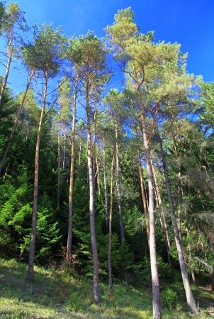 ruzomberok: Forest near town Ruzomberok, Slovakia Stock Photo