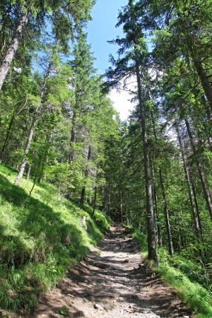 liptov: Kvacianska dolina - valley in region Liptov - Slovakia