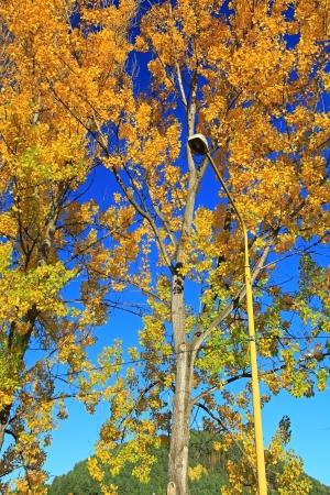 ruzomberok: Autumn leaves   old lamp at city Ruzomberok, Slovakia Stock Photo