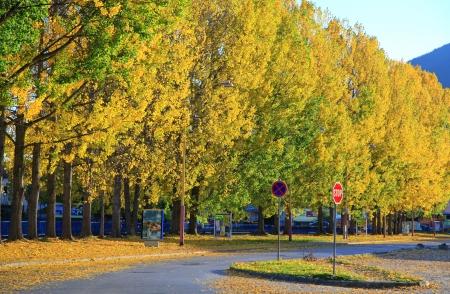 ruzomberok:  Autumn trees at town Ruzomberok