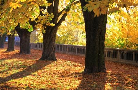 ruzomberok: Autumn at park - town Ruzomberok, Slovakia Stock Photo