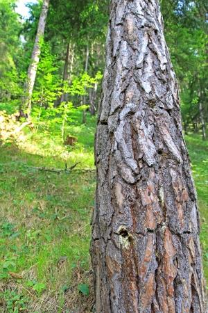 liptov: Nature in region Liptov - Slovakia