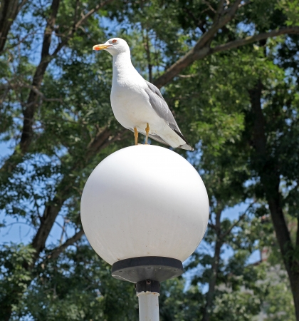 White seagull on lamp