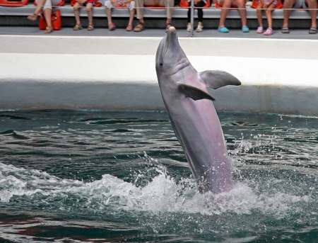 dolphinarium: Dolphins in dolphinarium Varna, Bulgaria Stock Photo