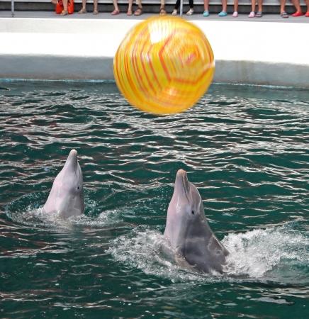 Dolphins in dolphinarium Varna, Bulgaria Stock Photo