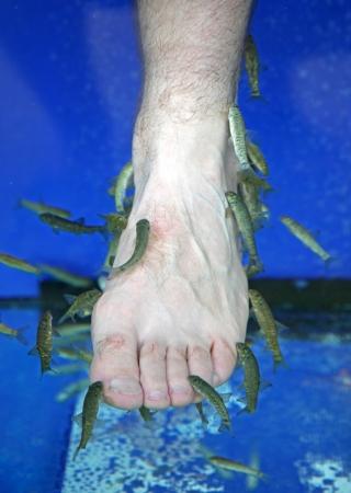 kangal: Doctor fish - fisha spa at Sunny beach, Bulgaria Stock Photo