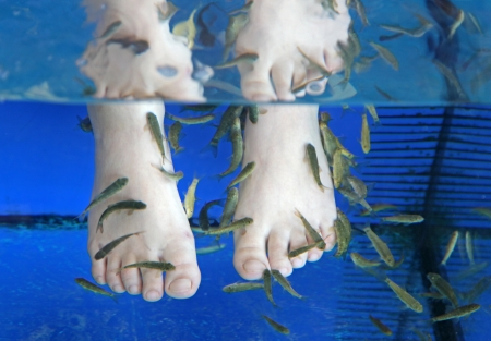 kangal: Doctor fish - fisha spa at Sunny beach, Bulgaria Stock Photo