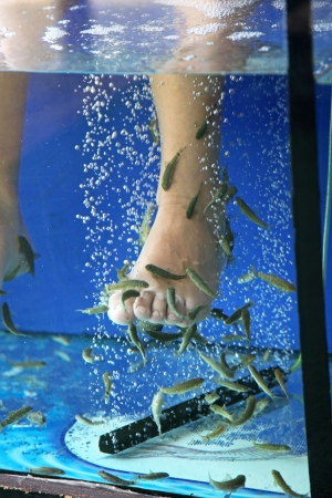 Doctor fish - fisha spa at Sunny beach, Bulgaria Stock Photo - 24237096