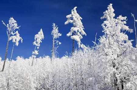Snowy nature in High Tatras mountains, Slovakia photo