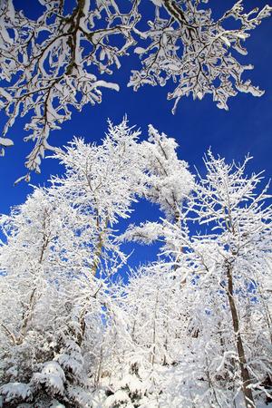 Snowy trees in High Tatras mountains, Slovakia photo