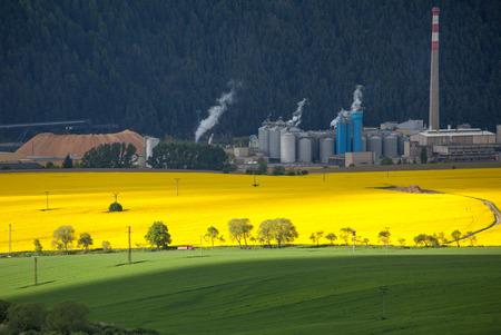 ruzomberok: Rapeseed field and factory Mondi at town Ruzomberok, Slovakia