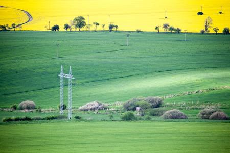 rapaseed: Field of rapeseeds at region Liptov, Slovakia