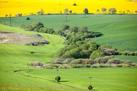 liptov: Field of rapeseeds at region Liptov, Slovakia