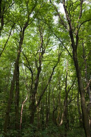 greenwood: Greenwood near Bratislava, SLovakia