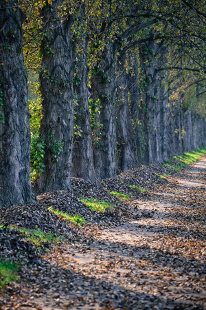 alergy: Autumn leaves at alley Stock Photo