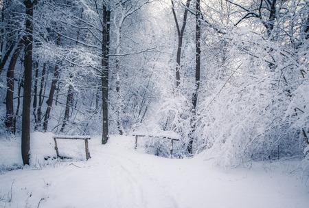 slovakia: Winter forest, Slovakia Stock Photo