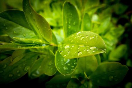 Waterdruppel op bladeren