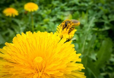 bee on flower: Bee on flower