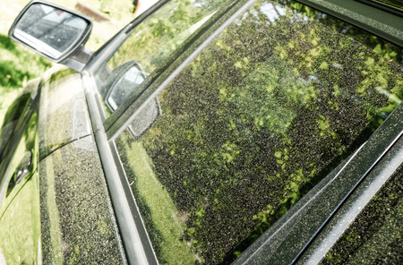 alergy: Pollen on car