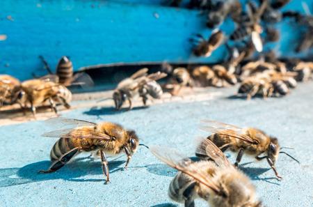 bees: beehive Stock Photo