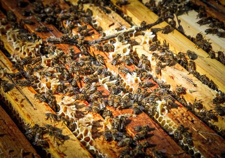 beekeeping: Beekeeping