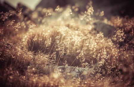 tatras: Field grass in Low Tatras, Slovakia